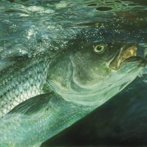 Striped Bass - painting